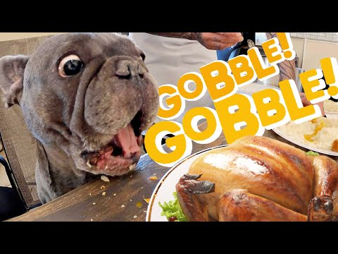 Surprising Homeless Dogs with Thanksgiving Dinner!