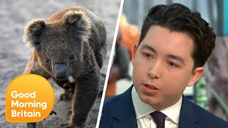 Should We Sell Dead Koala Fur for Charity? | Good Morning Britain