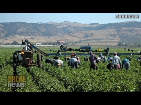Thanksgiving and Undocumented Farm Workers