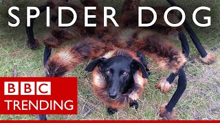'Spider-dog': Meet the dog & his master behind the prank
