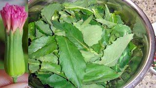 Veja o Poder Dessa Planta Medicinal
