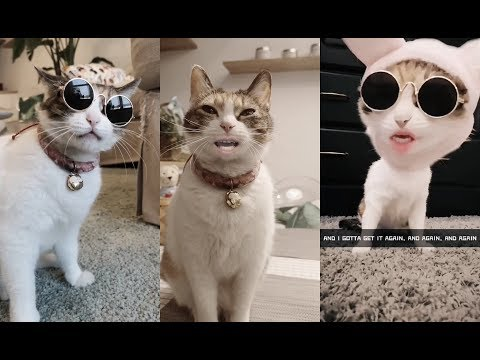 Funny Singing Cat   Funny Pet Videos Compilation