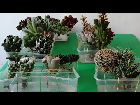 DIY CACTUS AND SUCCULENTS WATER THERAPY