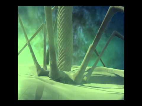 Bacteriophage animation