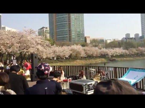 Seoul Cherry Blossom Festival - Siock Chon Lake