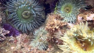 Laguna Beach Tide Pools And Mpas