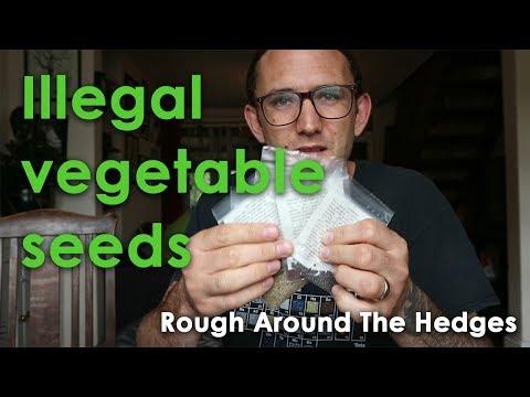 Illegal vegetable seeds!?