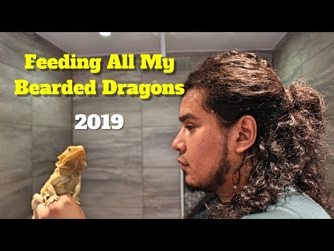 Feeding All My Bearded Dragons   Reviewing Bearded Dragon Food 🦎🦎🦎