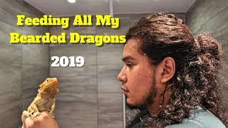 Feeding All My Bearded Dragons | Reviewing Bearded Dragon Food 🦎🦎🦎