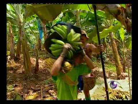 เรื่องกล้วยกล้วย