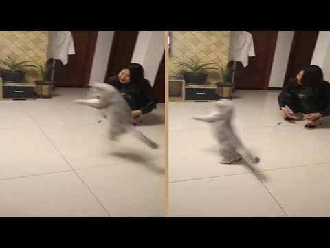 Cute Cat Jumping And Bouncing Like A Kangaroo