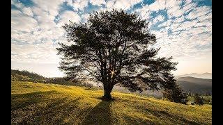 Rüyada Ağaç Gören Kişinin Hayatında Önemli Değişiklikler Görülecektir