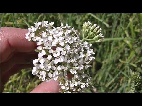 5 Favorite Medicinal Plants & Their Uses - Medicinal Plants & Herbs
