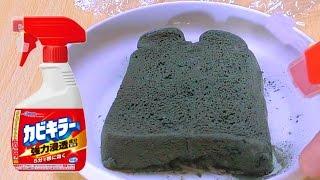 カビ食パンにカビキラーかけたら消滅するか実験!! 【閲覧注意】 PDS thumbnail