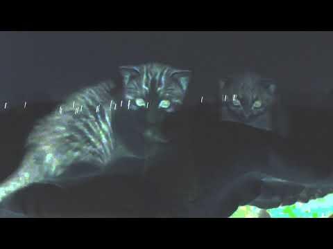 Litter Frog - Cat Mp3
