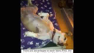Watch Kuranda Dog Beds-features & Assembly - Kuranda Dog Beds