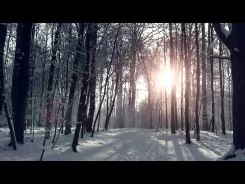 Imagine yourself in a frozen forest