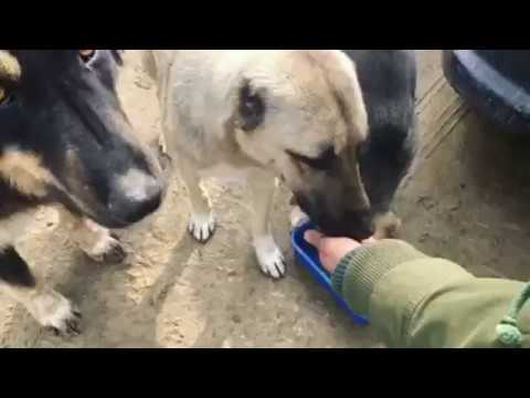 Feeding Street Dogs/Stray Puppies in Iran