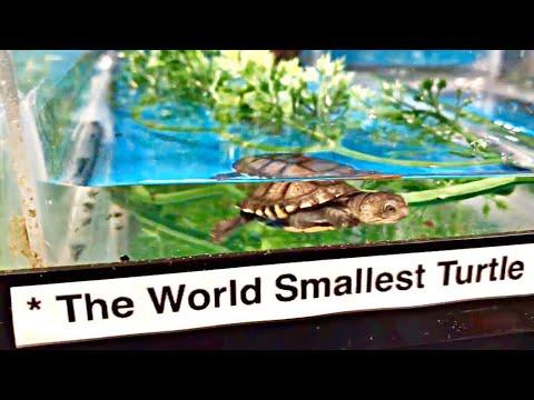 World's MOST EXOTIC Reptile EXPO!! *INSANE*