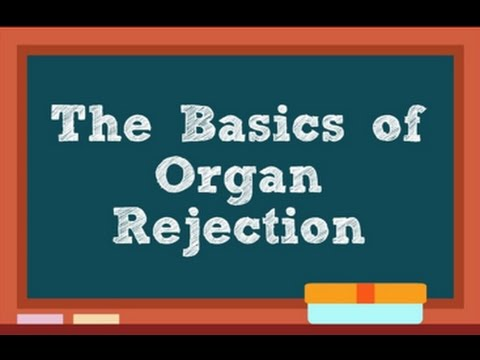 The Basics of Organ Rejection