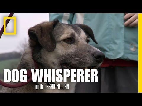 Socializing Molly | Dog Whisperer