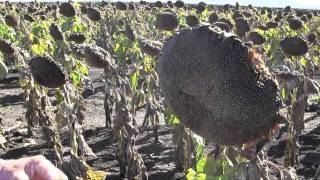 GRDC Over the Fence North: Romani Pastoral Company
