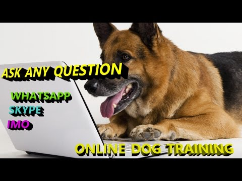 Online Dog training in hindi SAHIL - 7017379367  SUNIL - 7906390134
