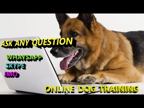 Online Dog training in hindi SAHIL - 7017379367  SUNIL - 7906390134 { smart dogs training }