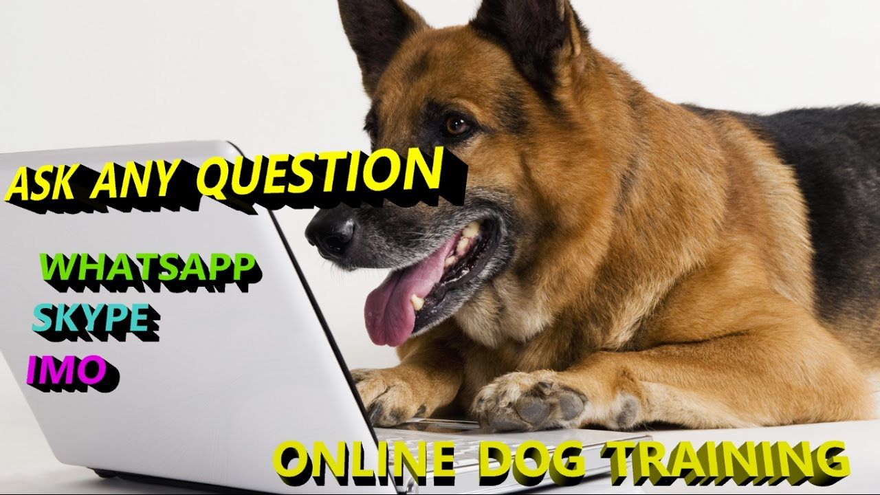 How To Dog Training Videos In Hindi