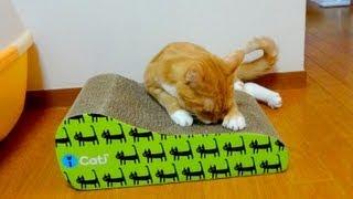 ようやく新しい爪とぎを気に入ってくれた猫」の動画です(*^_^*) this vi...