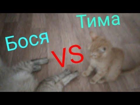 Бося VS Тима {кто же победит? }