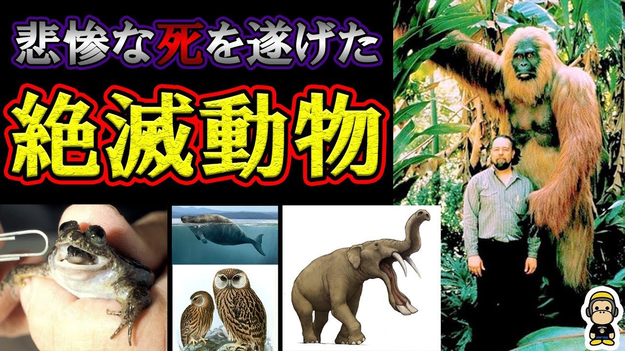 【悲惨】生存してて欲しかった絶滅した可哀想な動物達