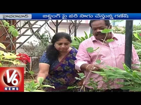 Terrace Gardening By Builder Ganesh | Paddy Farming On The Roof | V6 News