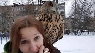Сова наступила на лицо. Почему птиц нельзя носить на плече.