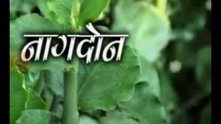 How to Grow Nagdon Gardening Sekho in Hindi/Urdu