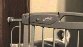 Evenflo Summit Tension Gate Review
