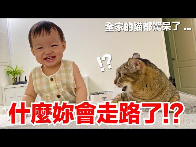 【小貓奴養成記EP20】為什麼妳會走路了!?全家的貓都驚呆了...