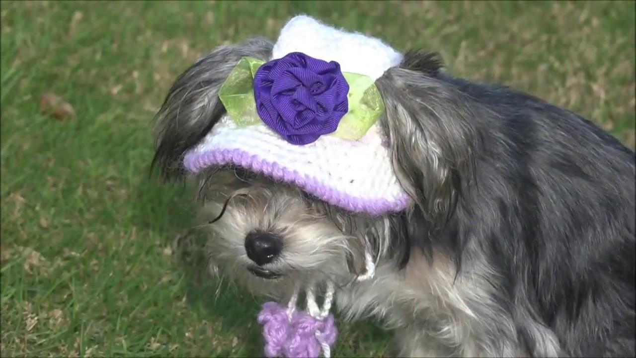Gorro y sombrero para perro parte 1/ how to crochet a dog hat. part ...