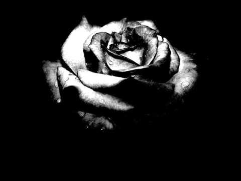 SANGRE NUEVA - Rosa Negra
