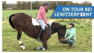 Krasse Pferdetricks mit Lisa 🔥 ON TOUR bei Lewitzerpoony