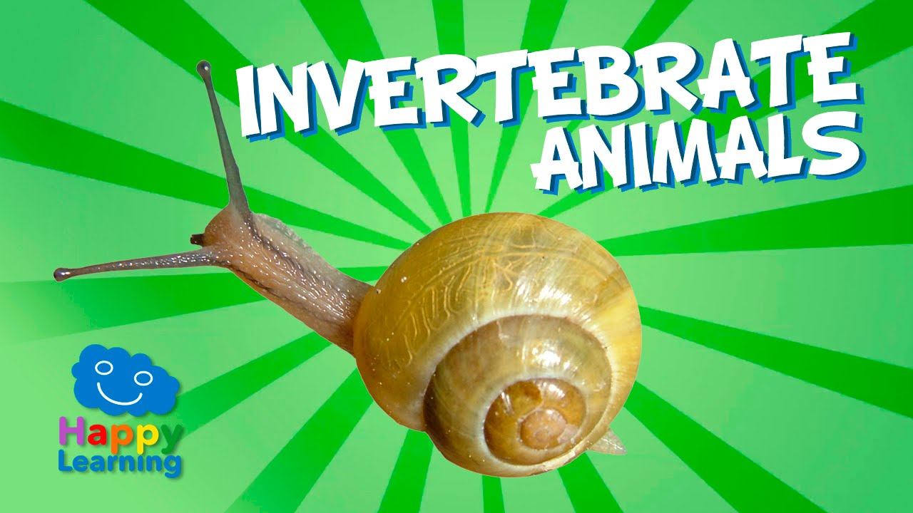Invertebrate Animals  Educational Video for Kids - YouTube free worksheets, worksheets for teachers, worksheets, math worksheets, and printable worksheets Classifying Invertebrates Worksheet 2 720 x 1280