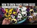How To Grow Pansy From Seed (With Full Updates)