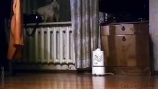 Кот Мотька орет на окне