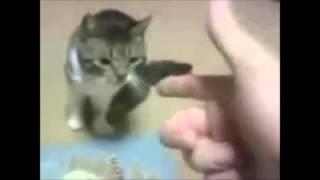 Собачий прикол Невероятно забавная подборка роликов про собак и кошек Прикольно смотреть!