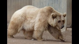 Most Amazing Hybrid Animals to Ever Exist