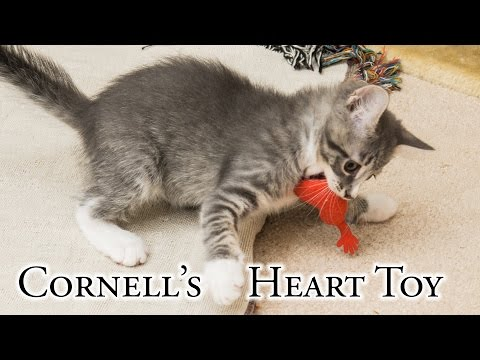Cornell's Heart Toy