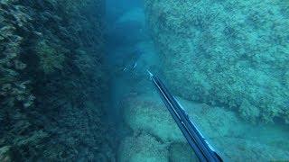 Выбор Подводная охота 100