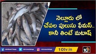 నెల్లూరు లో చేపల పులుసు ఫేమస్.. కానీ తింటే మటాష్   Illegal Catfish Farming in Nellore   10T News