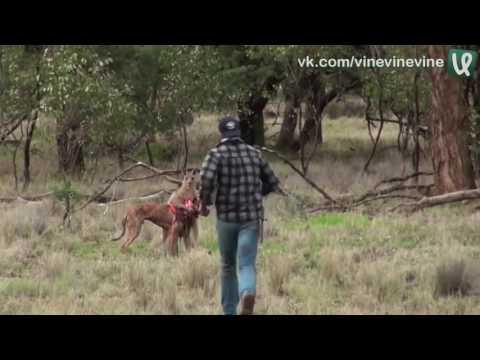 Приключение кенгуру