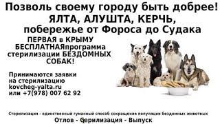 Алушта. Отлов и стерилизация бродячих собак от общественной организации «Ковчег»